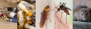 شركة مكافحة الحشرات ام القيوين