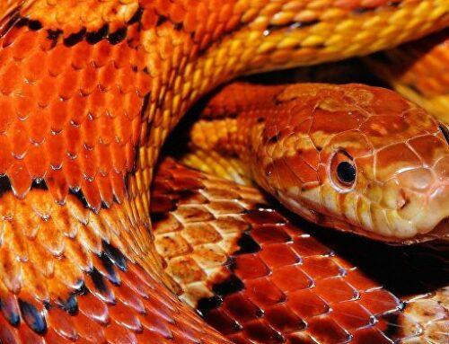 شركة مكافحة الثعابين في الشارقة |0563902844| طارد