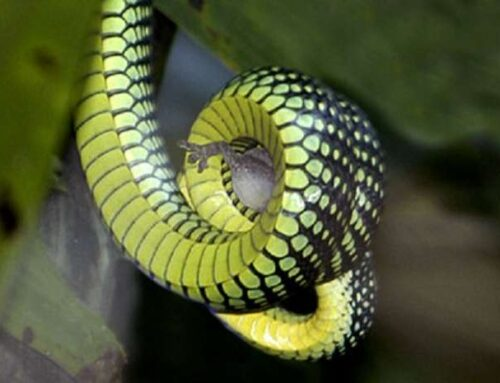 شركة مكافحة الثعابين في راس الخيمة |0563902844