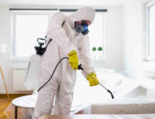 شركة تعقيم منازل في الفجيرة |0563902844| تعقيم و تطهير